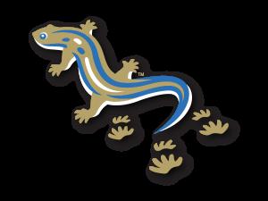Salamander artwork